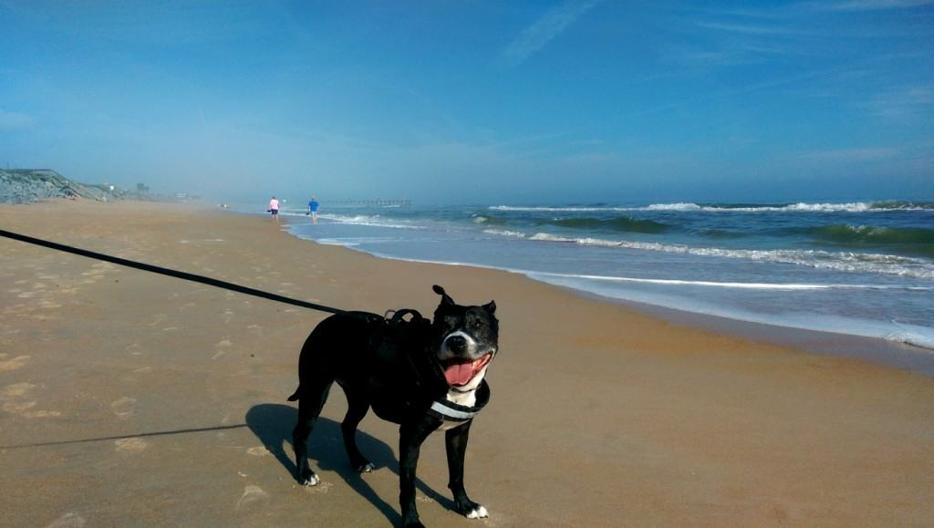 Luna Loves the Beach
