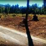 Farm Road LunaGrown