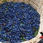 LunaGrown Blueberry Basket