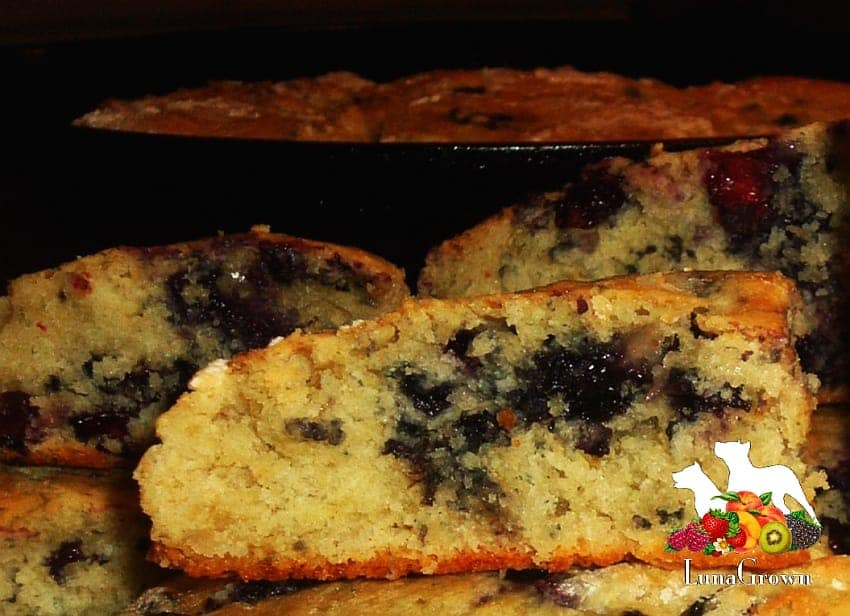LunaGrown Blueberry Biscuits