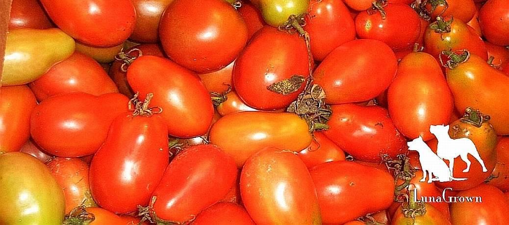 Traditional Tomato Jam. plum tomatoes
