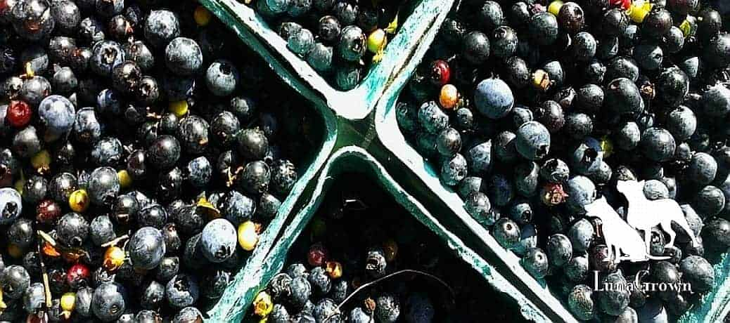 LunaGrown Wild blueberries ingredients