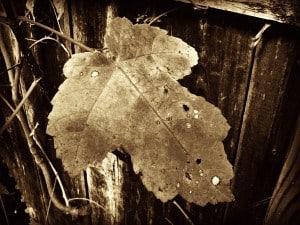 Leaf Viewing